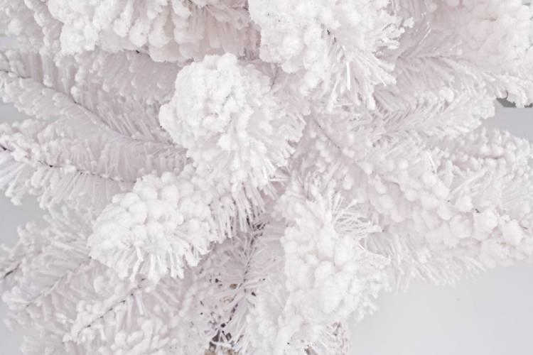 Albero pino bianco con neve 90h