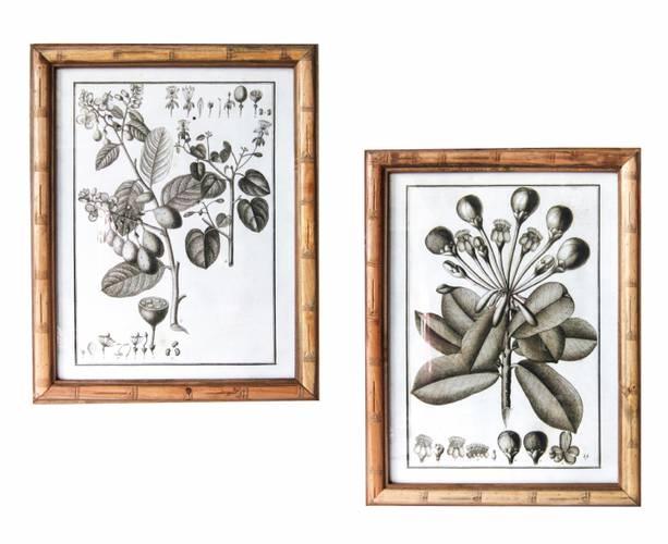 Coppia quadri stampa botanica