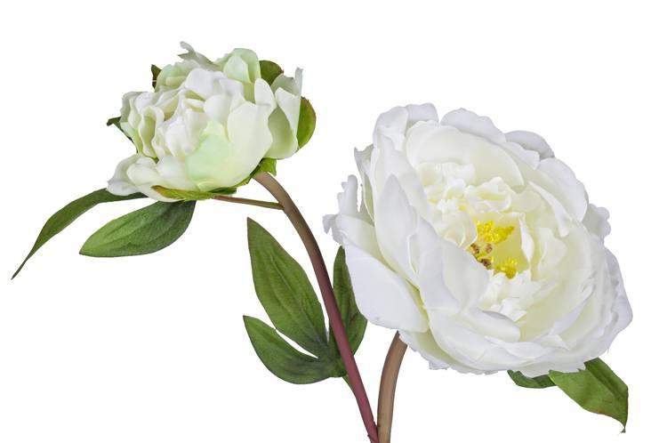 Fiore peonia bianca 43h