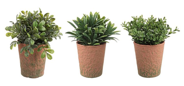 Piantina foglie verdi in vaso 16h