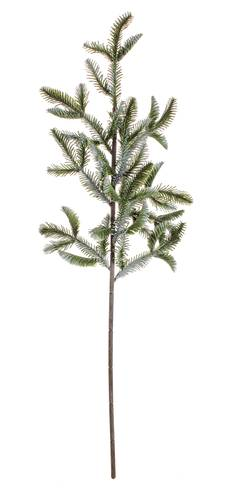 Ramo di pino verde sbiancato 72h