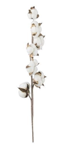 Ramo fiori di cotone