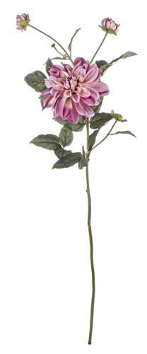 Fiore dalia rosa 80h