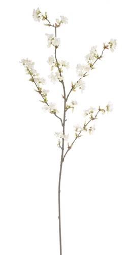 Ramo fiori di ciliegio